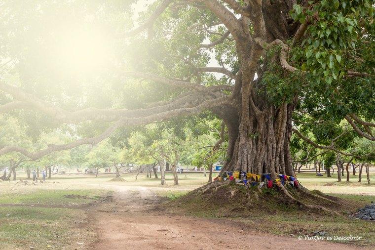 Arbre a propr d'una stupa a Anuradhapura
