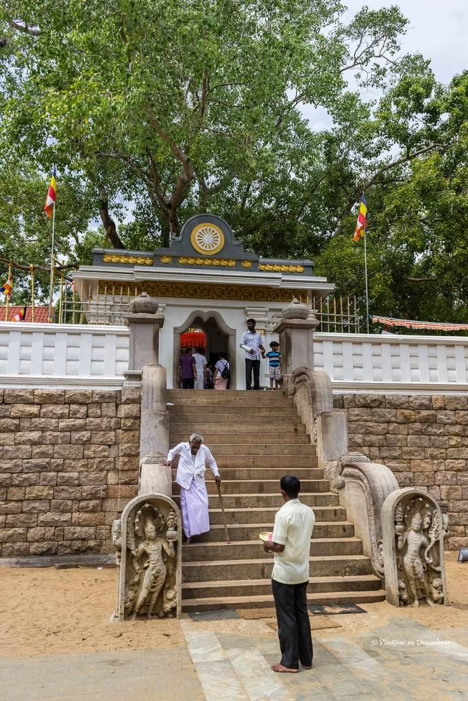 Els peregrins s'agrupen al voltant del Bodhi Tree