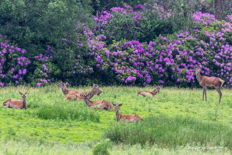 cervols durant el viatge a irlanda