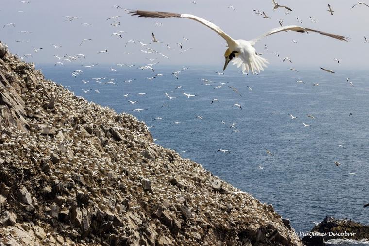 colonia de mascarells a la illa saltee