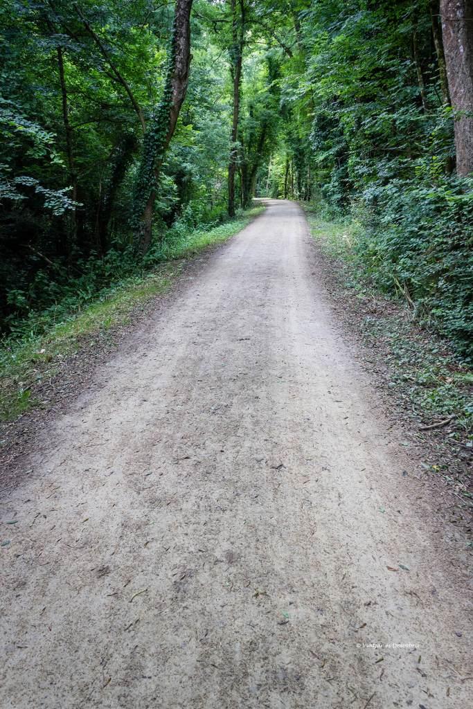cami pel bosc amb bicicleta a la bretanya francesa