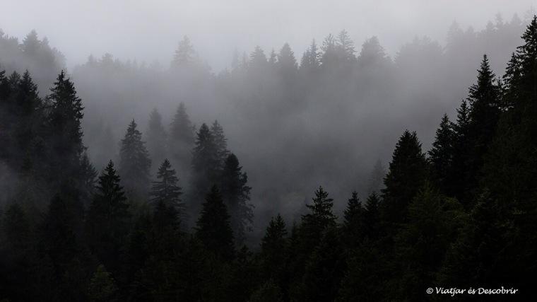 boira entre els arbres d'eslovenia