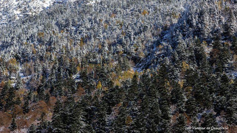 paisatge tardor a la vall d'aran