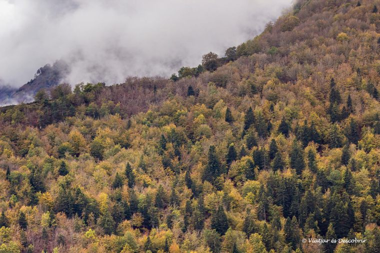 panoramica dels boscos de la vall d'aran