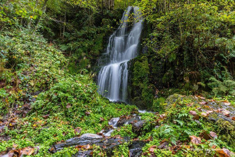 salt d'aigua entre vegetació a la vall de toran