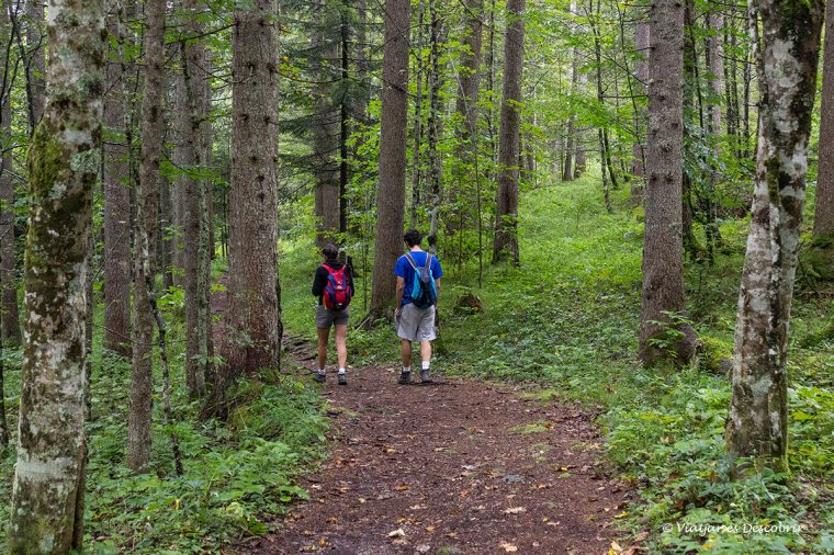 caminant per la vall logarska dolina a eslovenia