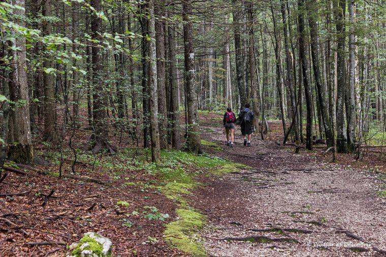 excursio pel bosc de logarska dolina durant el viatge a eslovenia