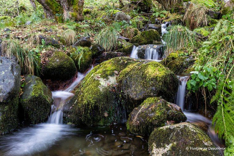 riu al bosc de carlac a prop de bousen