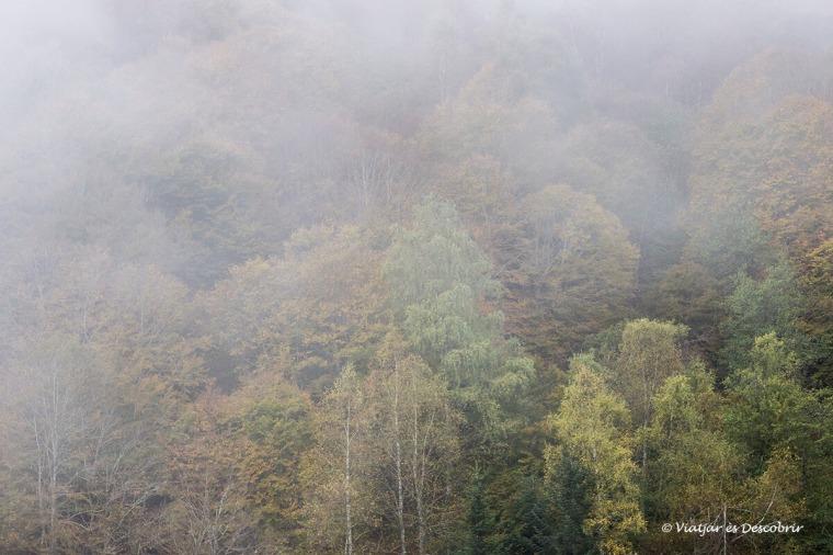 boira de tardor al bosc de carlac