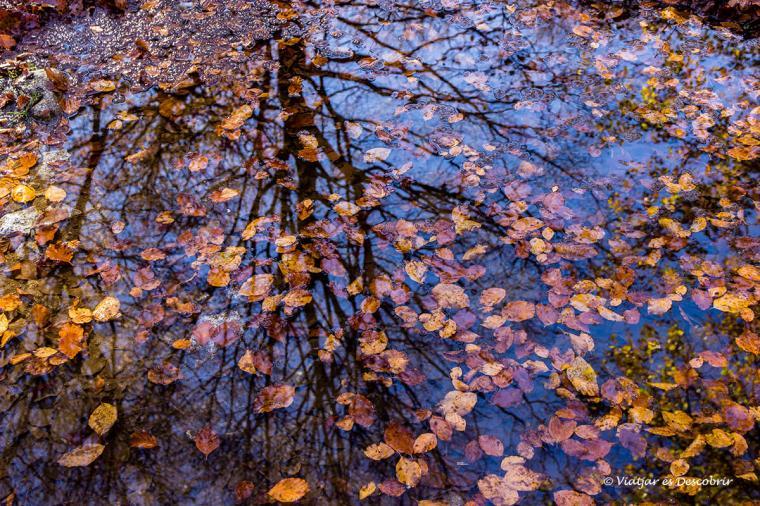 fulles de tardor a la vall d'aran