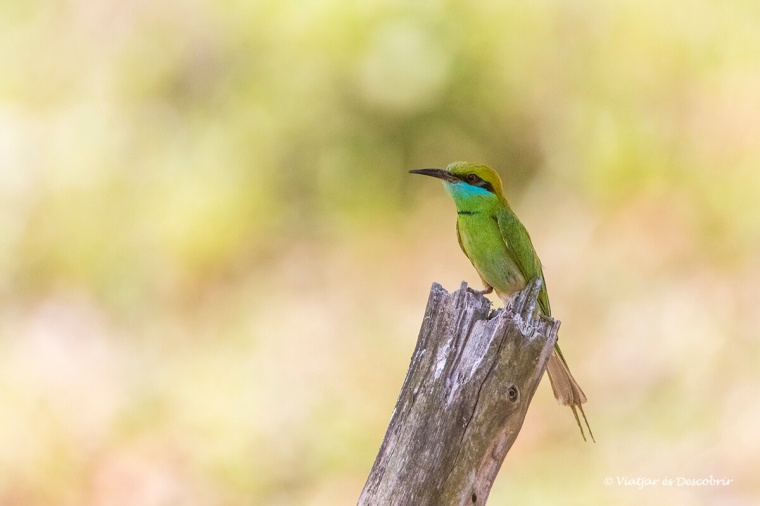 un bonic ocell durant un safari a l'india