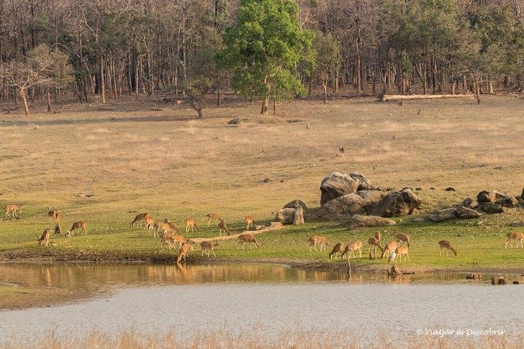 els paisatges dels safaris del viatge a l'india són sorprenents